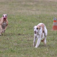 Coursing-Training in Babenhausen