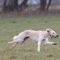 Coursing Training 2016